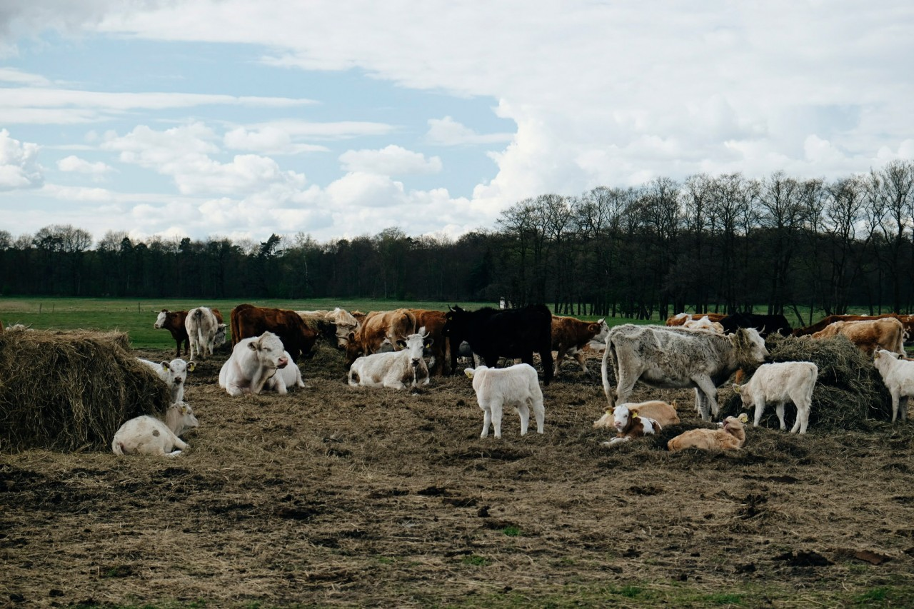 Milch & Moos · Vom Wandern und vom guten Essen · Brandenburg, Berlin April · Wanderung Müritz-Nationalpark zum Forsthaus Strelitz