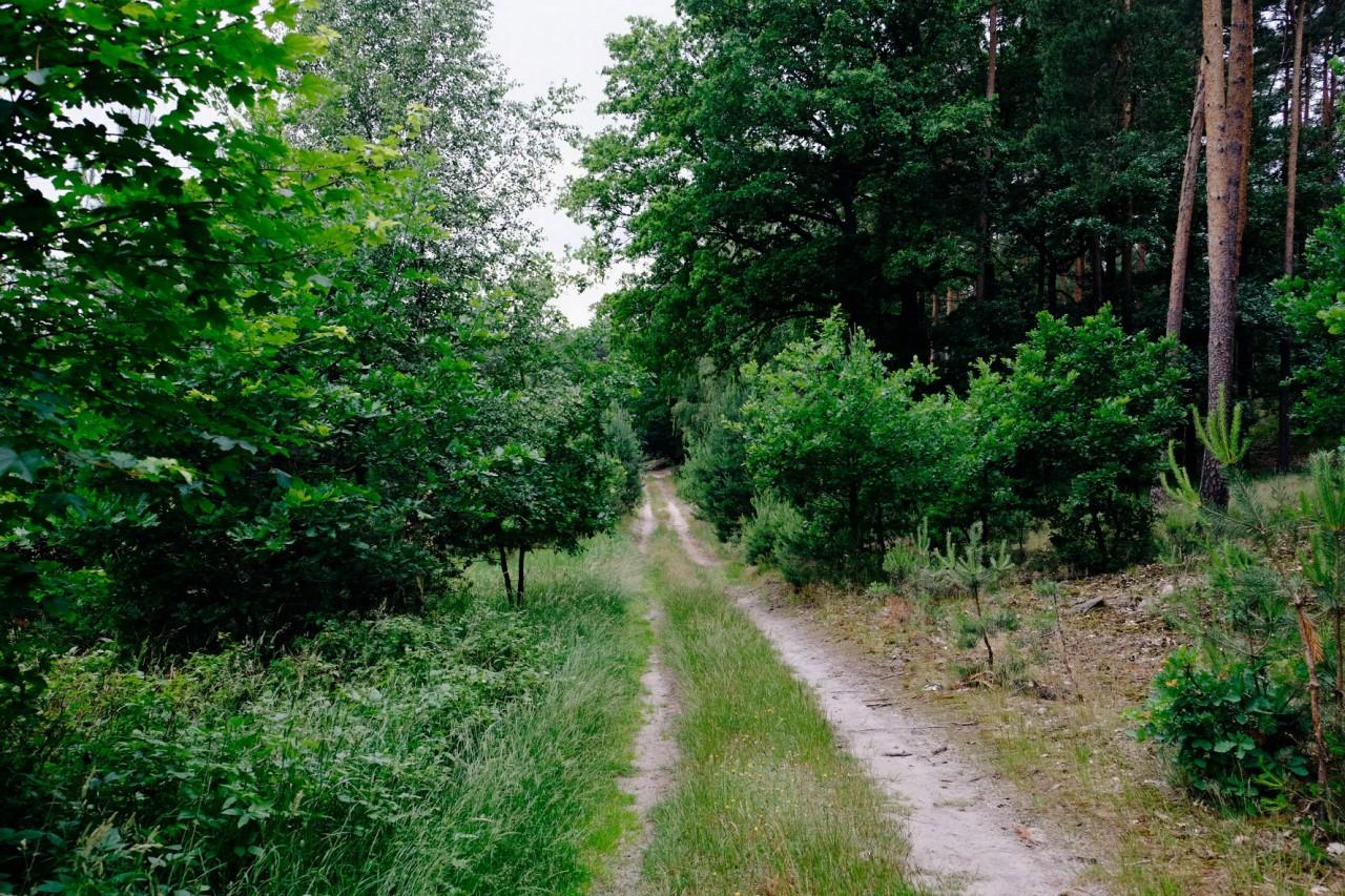 Milch & Moos · Vom Wandern und vom guten Essen · Brandenburg, Berlin Juni · Wanderung Uckermark, Angermünde, Gin